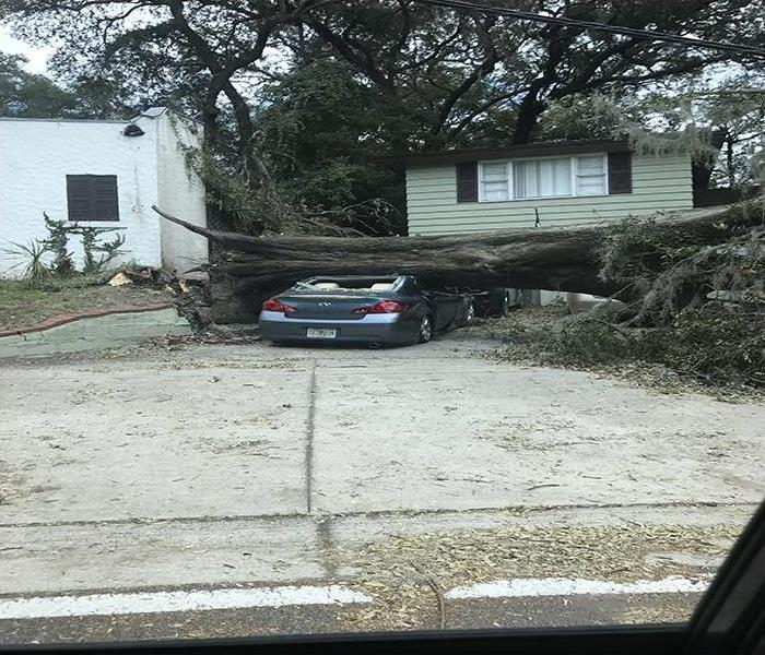 Hurricane Irma Topples Large Tree In Arlington