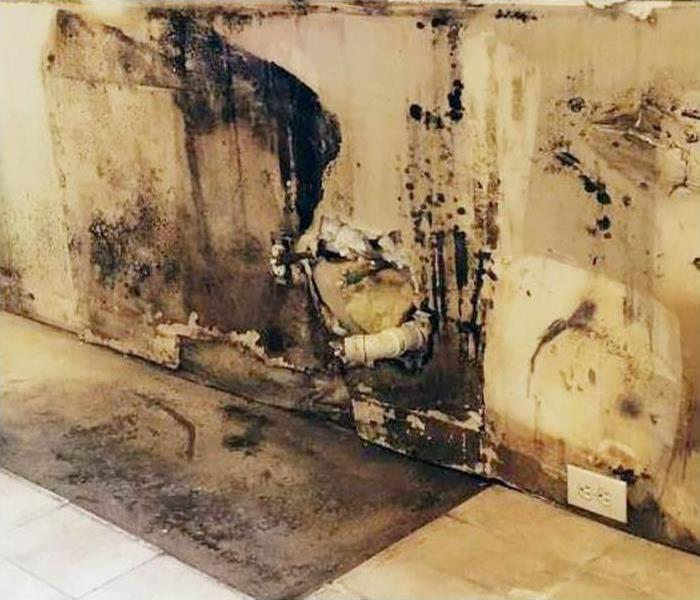 Mold Remediation In Arlington