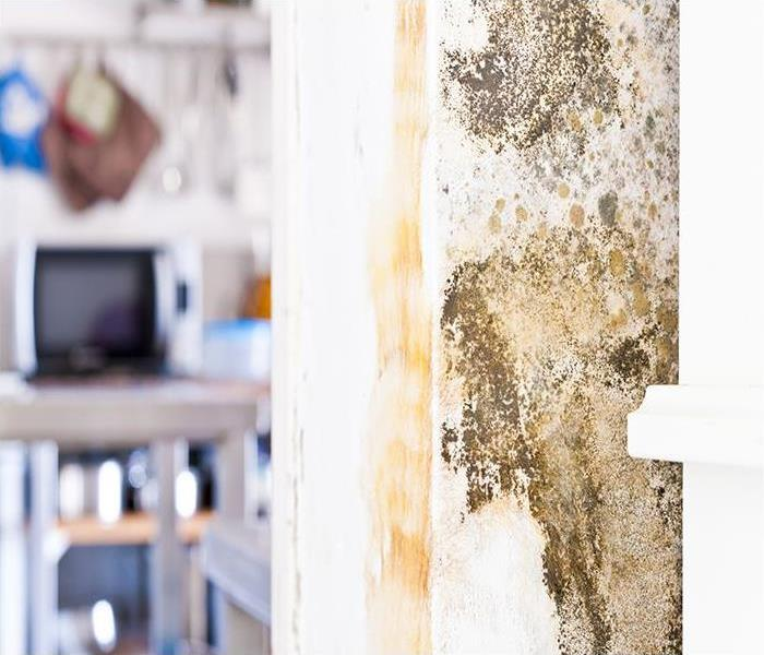 Mold Remediation Combating Kitchen Mold In Your Jacksonville Home