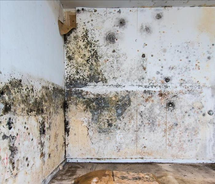 Mold Remediation Humidity Control A Key Component of Mold Damage Remediation