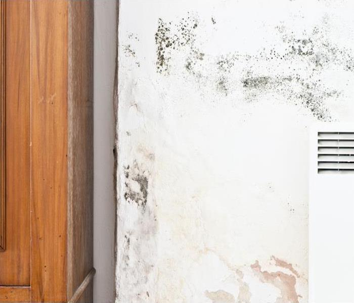 Mold Remediation When Foul Odors Plague Your Mold Damaged Arlington Home You Need Our Team At SERVPRO