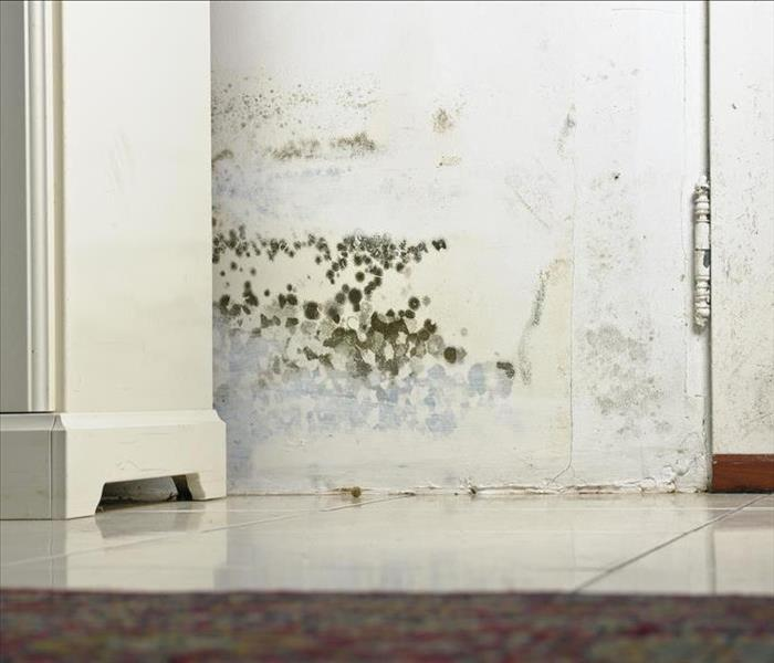 Mold Remediation Taking Care of Mold Damage Properly in Your Arlington Home