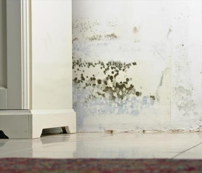 Mold Remediation Finding Mold Damage in an Arlington Property can Indicate One-Time or Ongoing Leaks