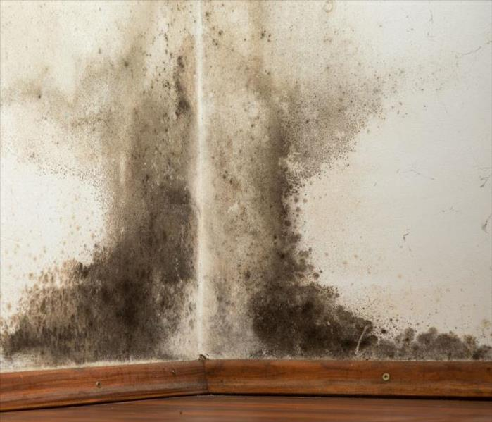 Mold Remediation How To Handle Household Mold Issues in Macclenny